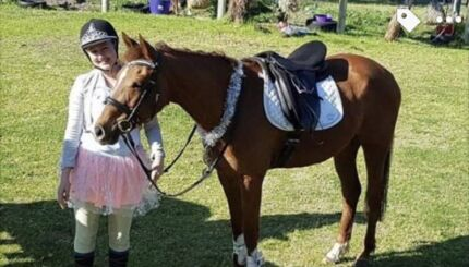 Riding Pony x Arab- Mare - 14.1h- 9 years