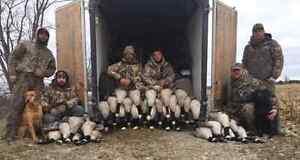 Fully guided waterfowl hunts  Windsor Region Ontario image 5