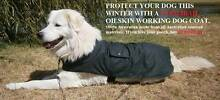 Coolibah Working Dog Coat - green Stanthorpe Southern Downs Preview