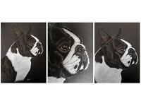 Original pastel drawing of boston terrier