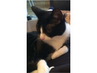 Black & white cat free to a good home