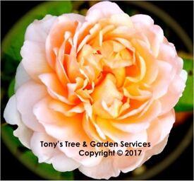 Tree Surgery & Garden Services