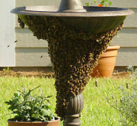Free Honey Bee Removal