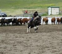 Flashy Cow Horse Gelding For Sale