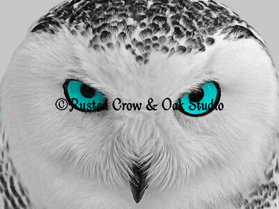 Modern Black White Grey Owl Bird Aqua Blue Eyes Home Decor Matted Picture A171 ()