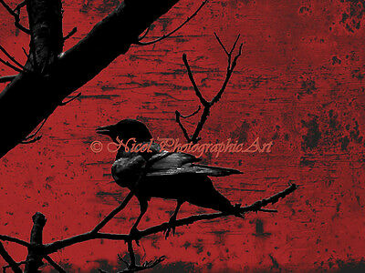 Raven Red Black Industrial Crow Wall Art Bird On Tree Branch Matted Picture A673