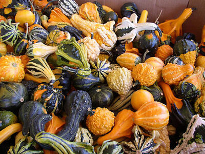 25 SMALL MIXED ORNAMENTAL GOURD SEEDS 2019 ( NON-GMO FREE SHIPPING! -