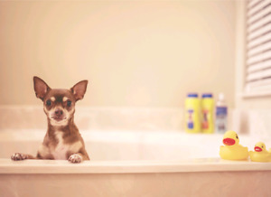 Dog Baths & Doggy Daycare