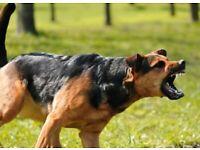 Problem Dog Rehabilitation-Problem Dog Behavior