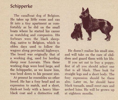 Schipperke - Vintage Dog Art Print - 1954 M. Dennis