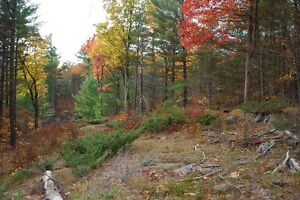 Heavily Treed 16 Acre Lot Near Bobs Lake