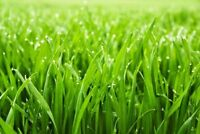 SAVE $$  on Lawn Aeration   Call this WEEKEND...519-872-1313