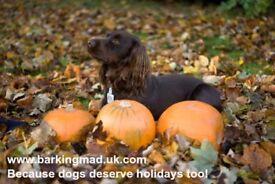Dog carers, North Ayrshire