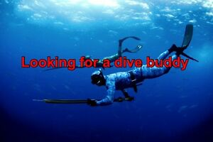 Looking for a dive buddy Mayfield West Newcastle Area Preview
