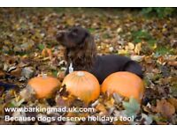 Dog carers, Inverclyde