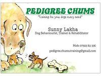 Dog & Puppy Training!!!!