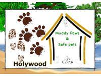 Dog walking, Pet Visits and Pet Sitting within Holywood