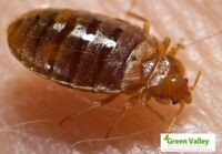 Experience a nature-friendly pest control services in Vancouver