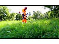 Tree surgery...cutting tree and removing garden waste...**CHEEP PRICES**ALL LONDON