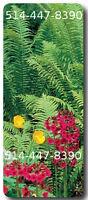 Plants 100% biologique - Plume d'autruche