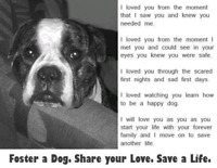 FOSTERS NEEDED!