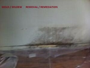 Mould, mildew  removal / remediation