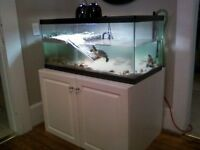 Turtle Tank/Aquarium for sale, with 2 filters plus water heater.