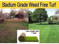 Weed Free Lawn Turf