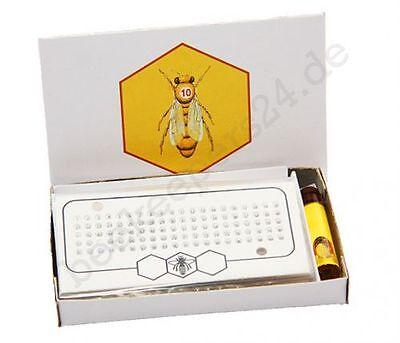 Leucht Opalith Zeichenplättchen mit Nummern, 5 Karten + Leim, Königin zeichnen