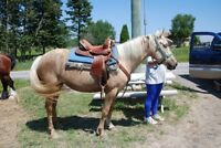 Rendonnée / chevaux / location et vente de chevaux