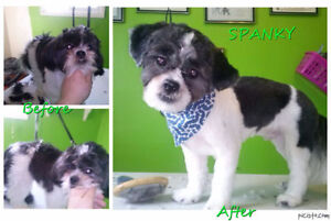 ***GROOMING GROOMING GROOMING **SUMMER IS HERE! reasonable rates