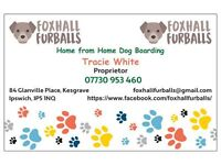 Foxhall Furballs - Home from Home Dog Boarding