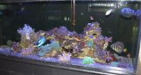 Live rock, salt water aquarium, $5lb