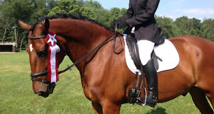 Lovely Clyde x Thoroughbred for Part-Lease in London London Ontario image 5