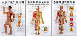 3 Massage Poster Charts - Meridians and Acupuncture Human Body Points Chart