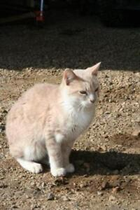 ROCKY - MALE CAT FOR ADOPTION