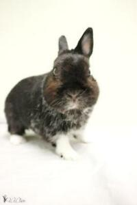 "Young Male Rabbit - Bunny Rabbit: ""Milo"""
