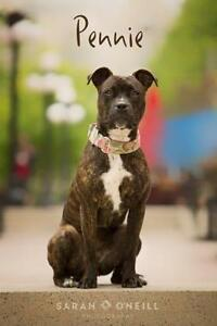 "Adult Female Dog - Pit Bull Terrier: ""Pennie"""
