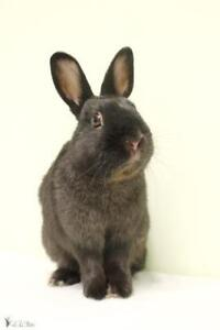 "Young Male Rabbit - Bunny Rabbit: ""Zoro"""