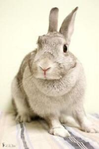 "Adult Female Rabbit - Bunny Rabbit: ""Ralfette"""