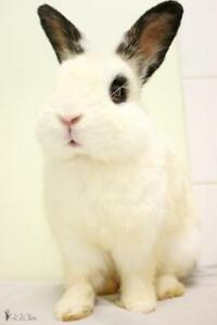 "Young Male Rabbit - Bunny Rabbit: ""Jimmy"""