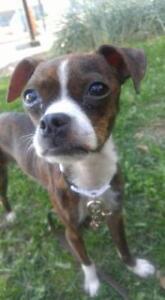 "Baby Female Dog - Mixed Breed: ""Mignonne"""
