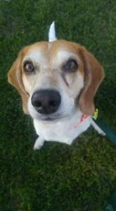"""Adult Female Dog - Mixed Breed: """"Gumby"""""""