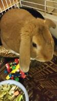 Bunnies, guineas and hamsters oh my!