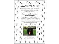 Pawsitive Steps - Dog Walking Service. Blairgowrie/Alyth/Coupar Angus