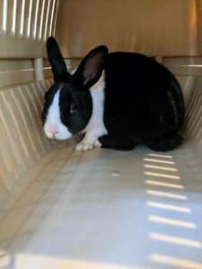 "Baby Female Rabbit - Bunny Rabbit: ""Lina"""
