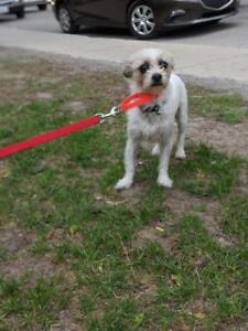 """Young Female Dog - Mixed Breed: """"Carla"""""""