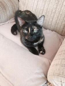 "Young Female Cat - Tortoiseshell: ""Juniper"""
