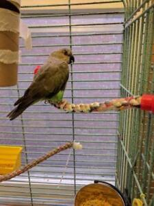 "Adult Female Bird - Parrot (Other): ""Bonnie"""