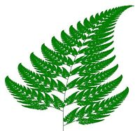 FERNS Lawn Care is offering a free liming!